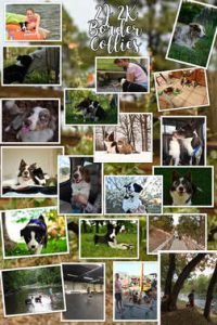 A collage of border collies with their family.