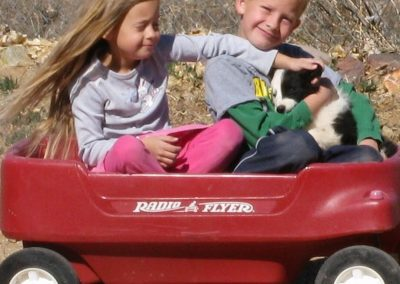 Children in a red wagon with a black and white border collie puppy.