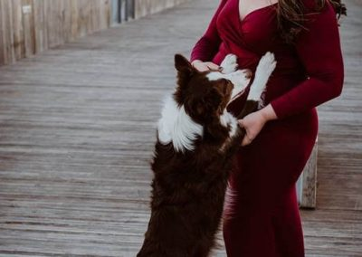 A red and white border collie hugging his pregnant Mom.
