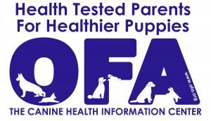 2J 2K Border Collies are OFA tested dogs.