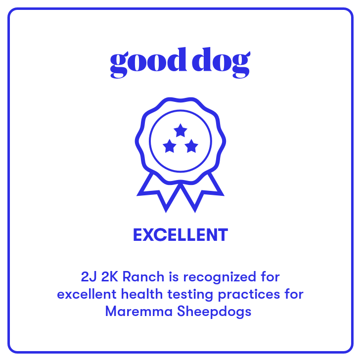 2J 2K Maremma Sheepdog Good Dog health testing badge.