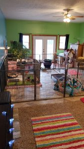 Border collie puppies in their colorful nursery.