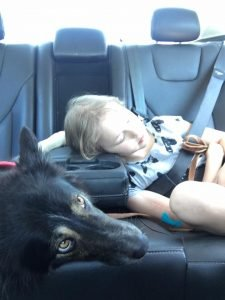 A border collie service dog and his handler traveling in a vehicle.