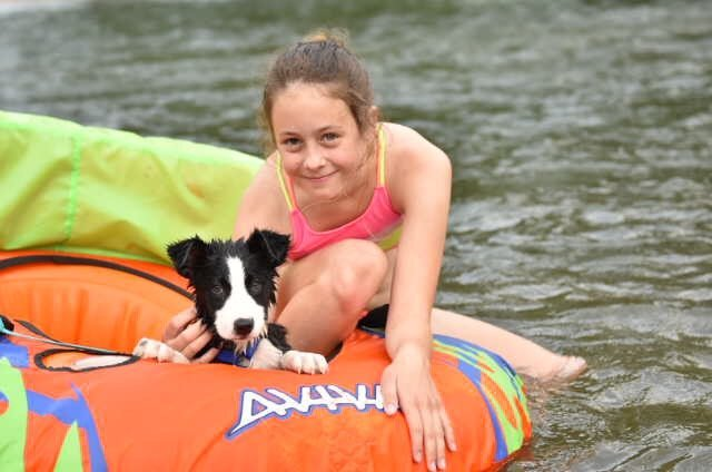 A black and white border collie on a inner tube in the river