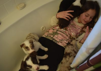 A girl in a bathtub with cute border collie puppies for sale.