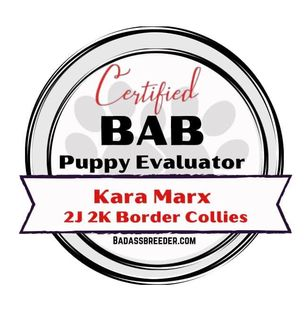 2J 2K Border Collies certification with BAB as a puppy evaluator.