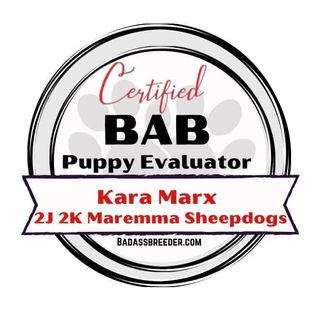 2J 2K Maremma Sheepdog BAB certified puppy evaluator badge.