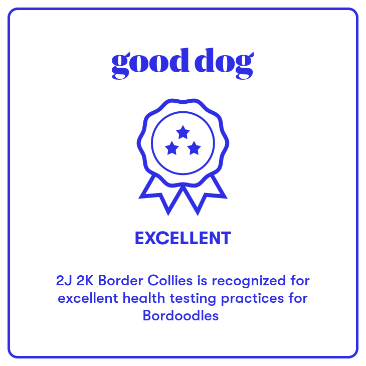 2J 2K Bordoodles Good Dog excellent health testing badge.