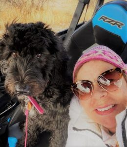 A Bordoodle puppy in the Arizona desert riding in a RZR.
