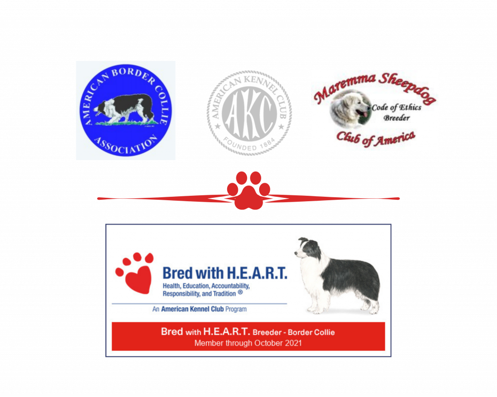 2J 2K Border Collie AKC Bred with HEART and MSCA Code of Ethics Breeder.