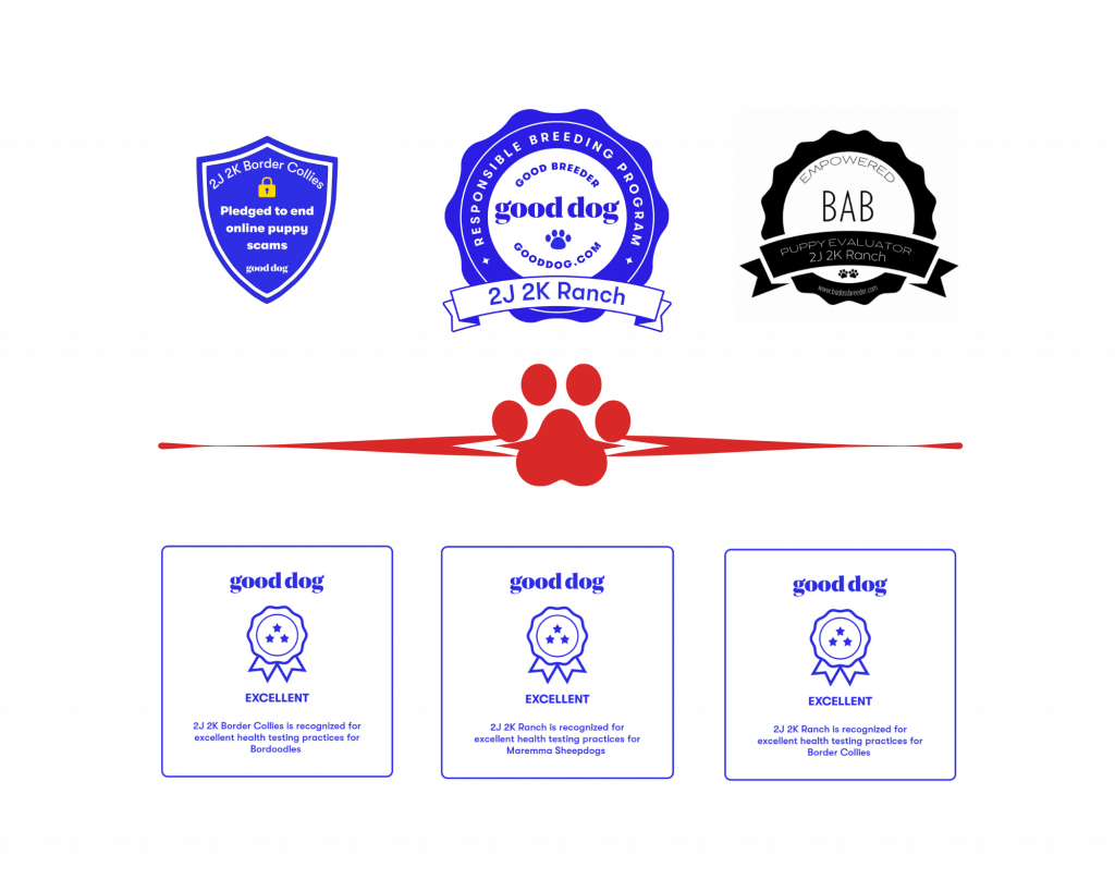 2J 2K Bordoodles recognized for excellent health testing practices by Good Dog.