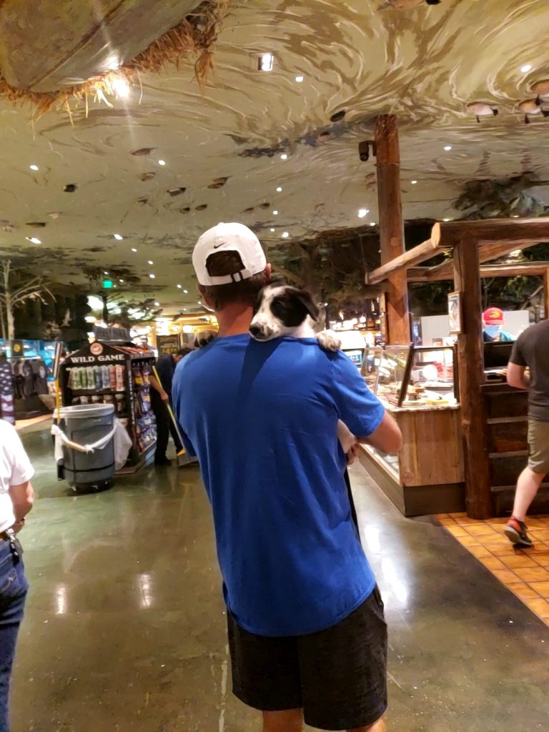 A man holding a black and white Border Collie puppy in Bass Pro.